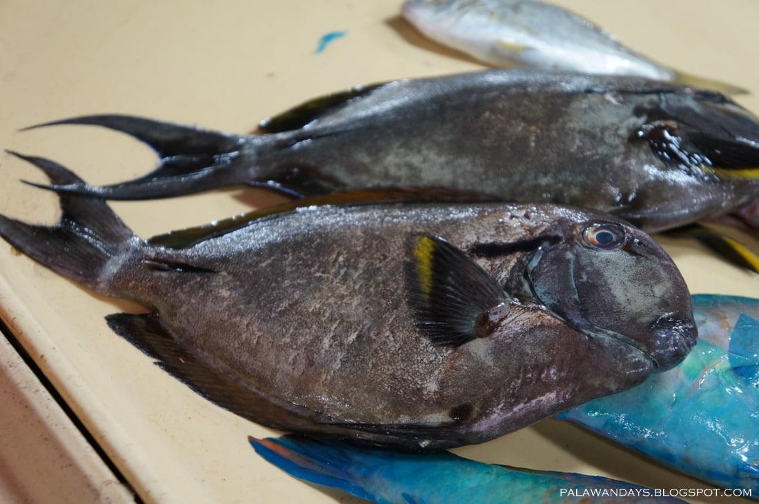 рыба бротола рецепты в духовке с