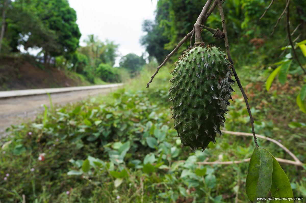 Tabon Cave palawan (7)