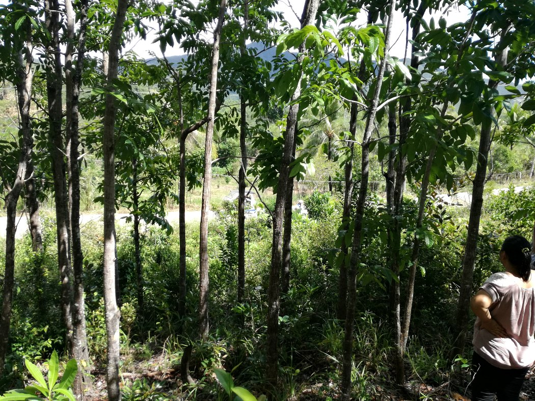 lot for sale palawan