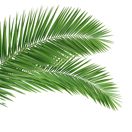 palm leaves (3)