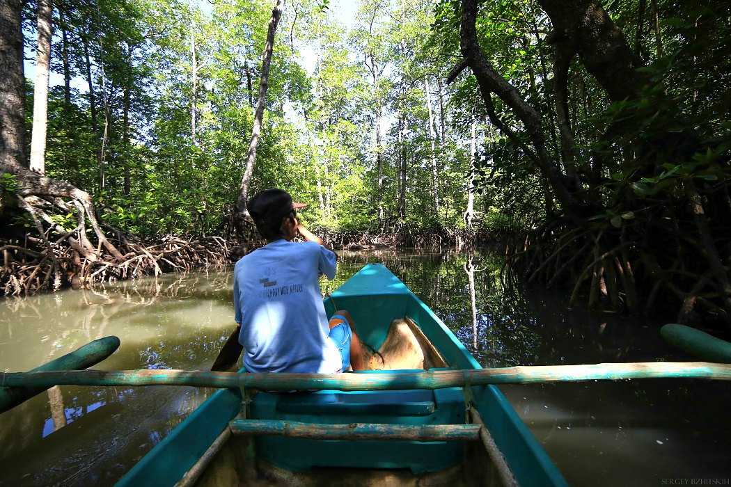 Mangrov forest Sabang Palawan