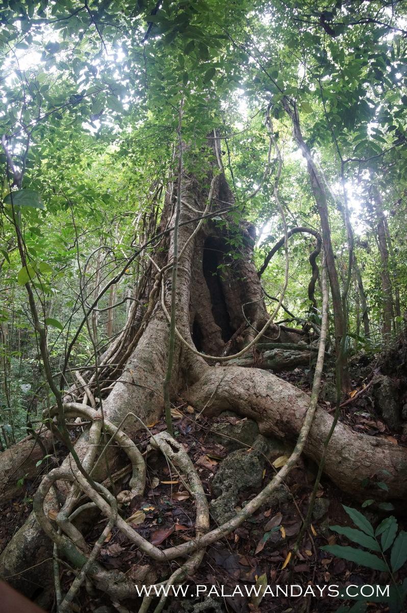 Tabon Cave palawan (52)