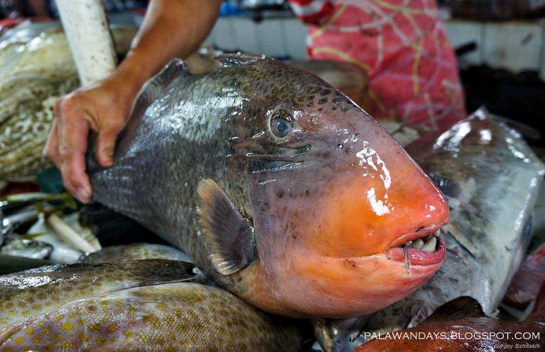 Рыбный рынок в Пуэрто Принцессе. Палаван