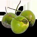 coconut_icon-Geewinexim