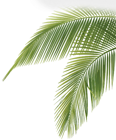 palm_fronds.png2