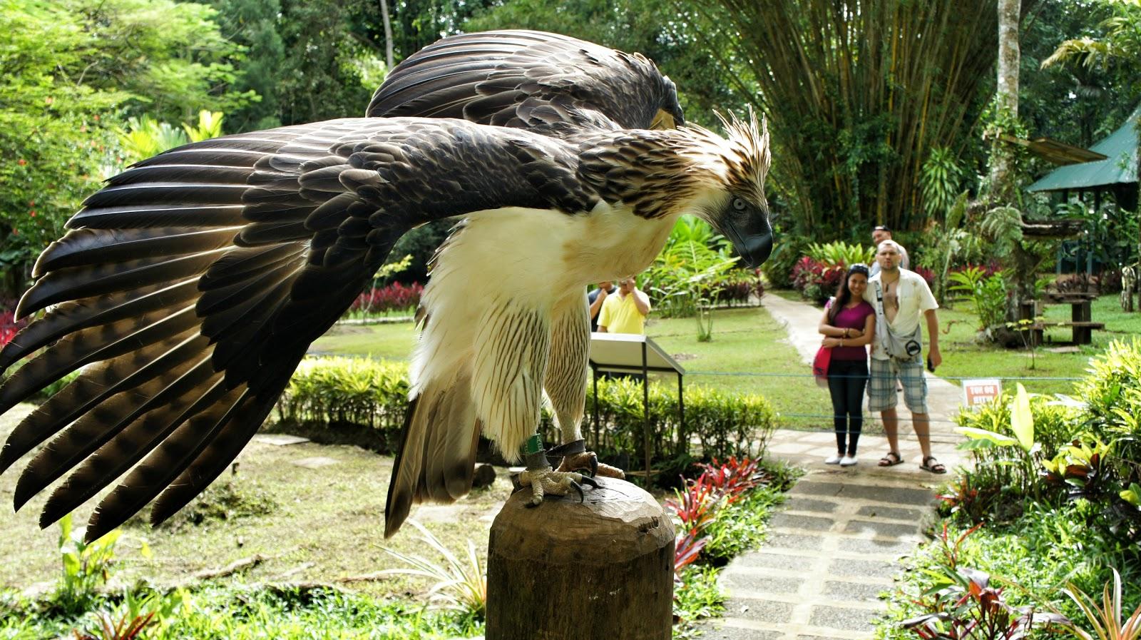 проучился там картинки самых больших птиц в мире этот раз