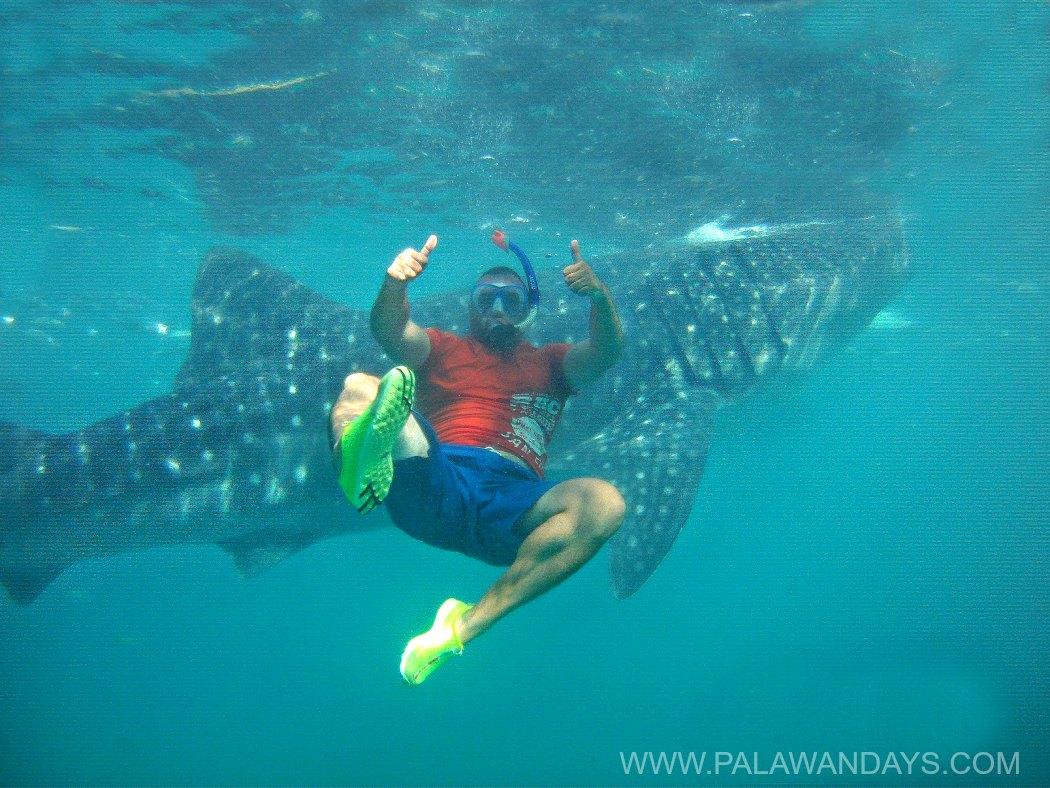 Whale sharks Cebu